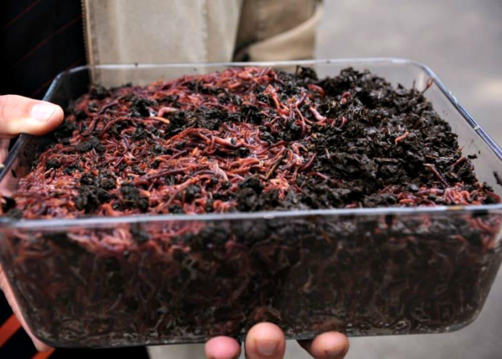 Изображение - Выгодный бизнес в маленьком городе для начинающих prodazha%20chervei%20i%20biogumusa1
