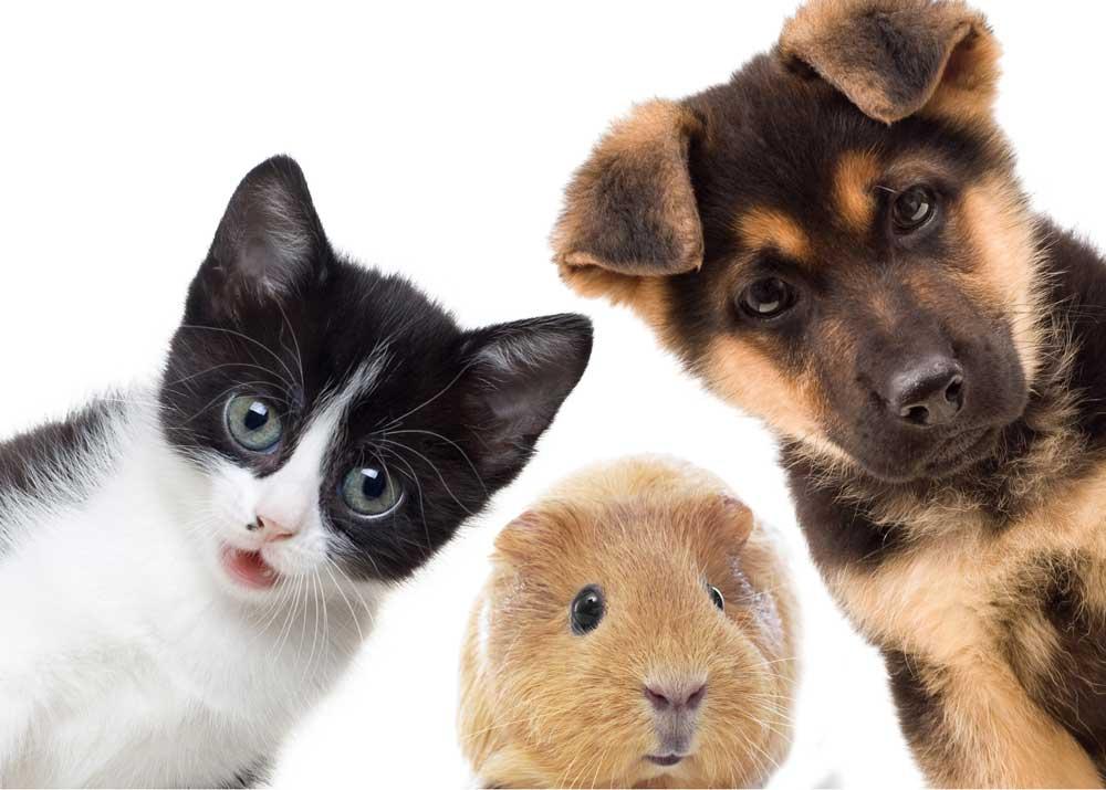 Свой бизнес салон красоты для животных