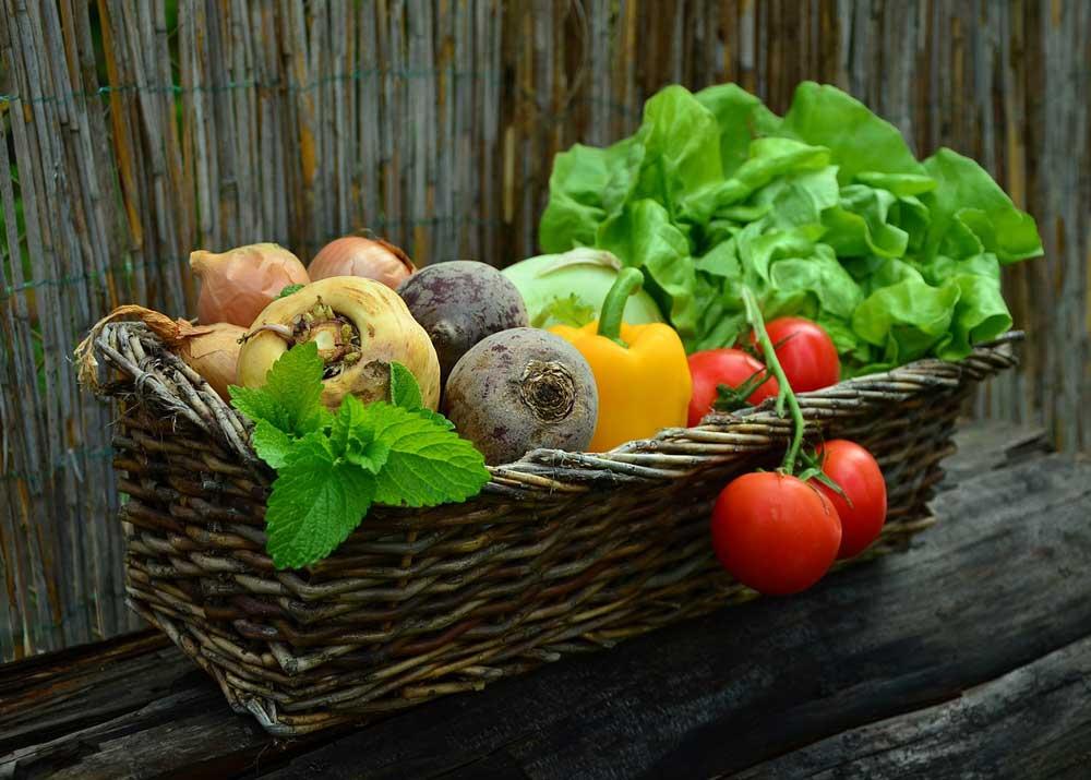 Бизнес план по овощеводства бизнес планы готовые фотостудия