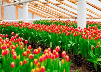 Бизнес-план по выращиванию цветов в теплицах