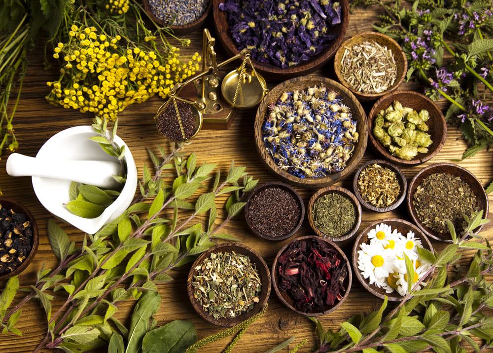 Лекарственные травы: рынок и поставщики