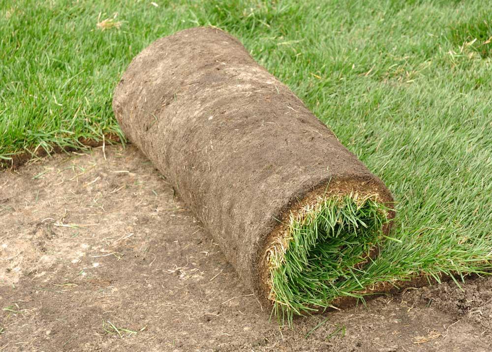 Выращивание газонов бизнес план издержки открытия фирмы