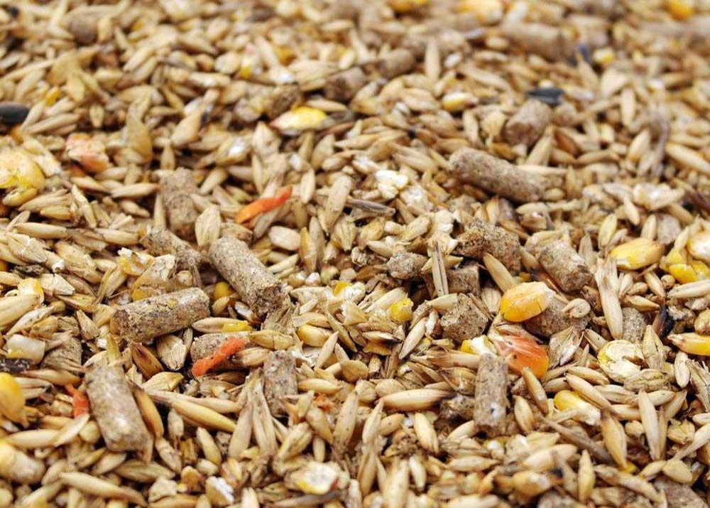 Производство кормовых добавок для животных доклад 4431