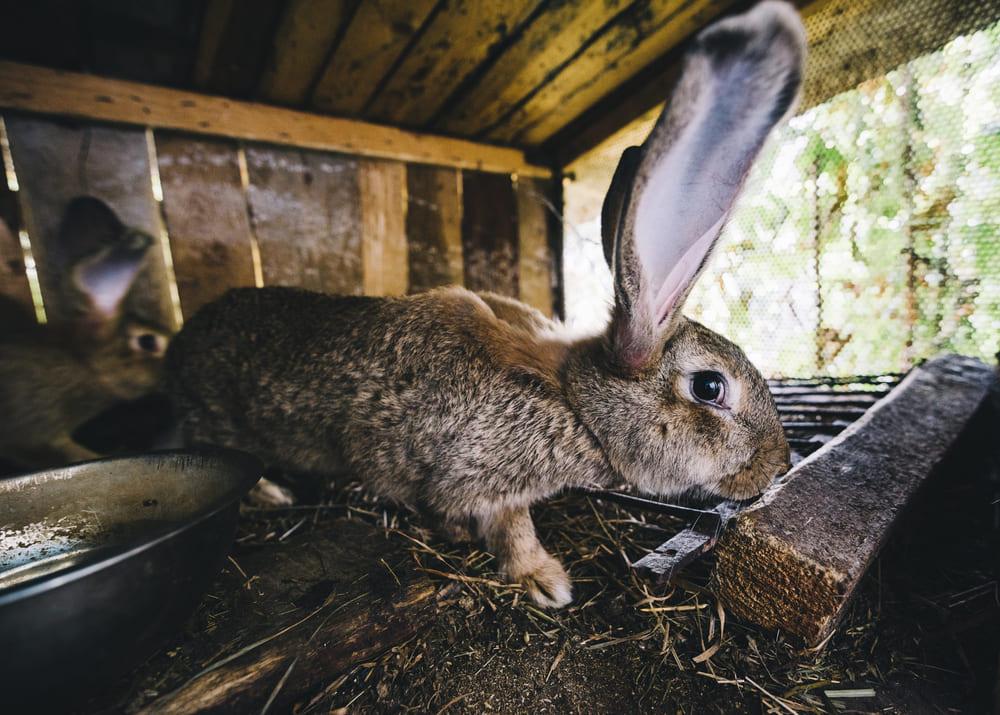 Мини кроликоферма в домашних условиях