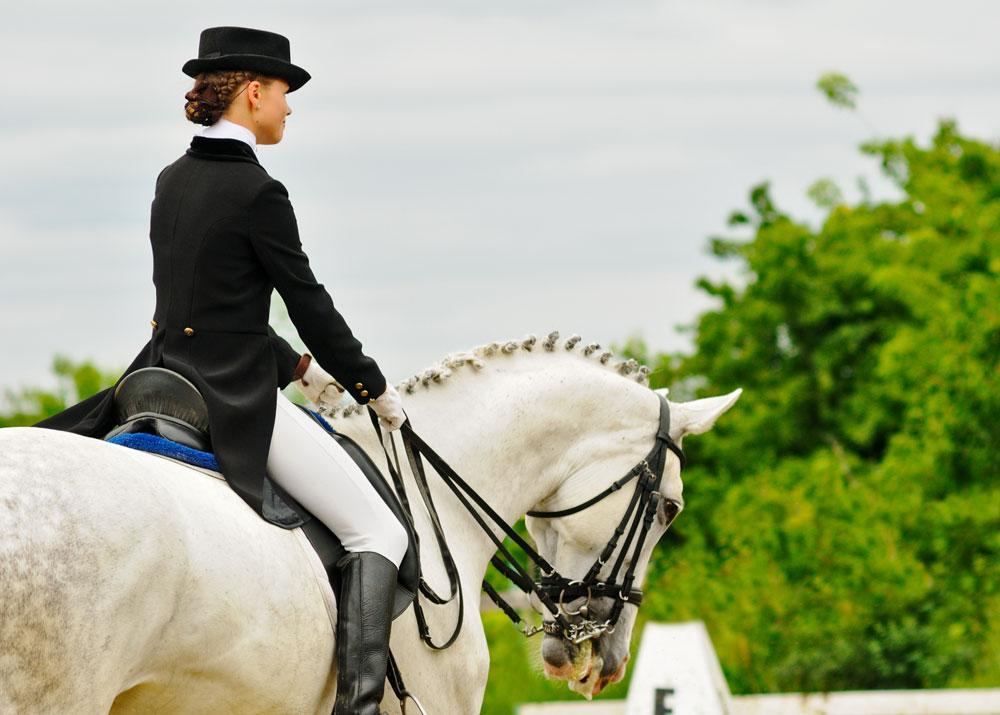 Как организовать занятия на лошадях