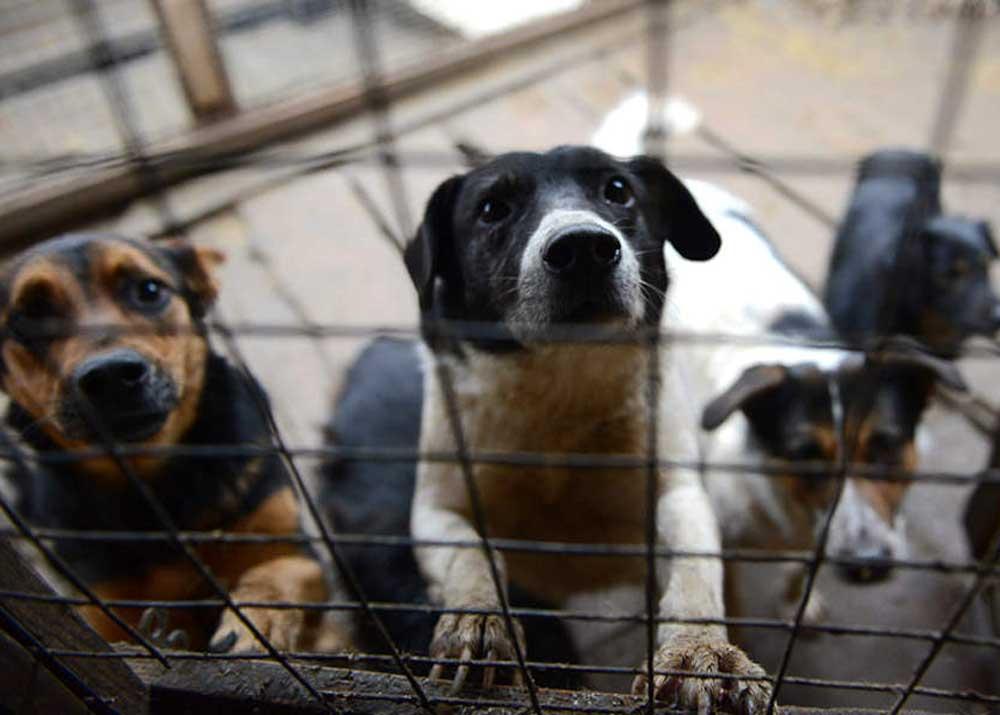 Собачий бизнес план открытие фирмы в новозыбкове