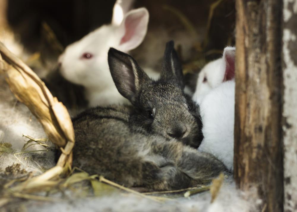 Свой бизнес на кроликах акселератах