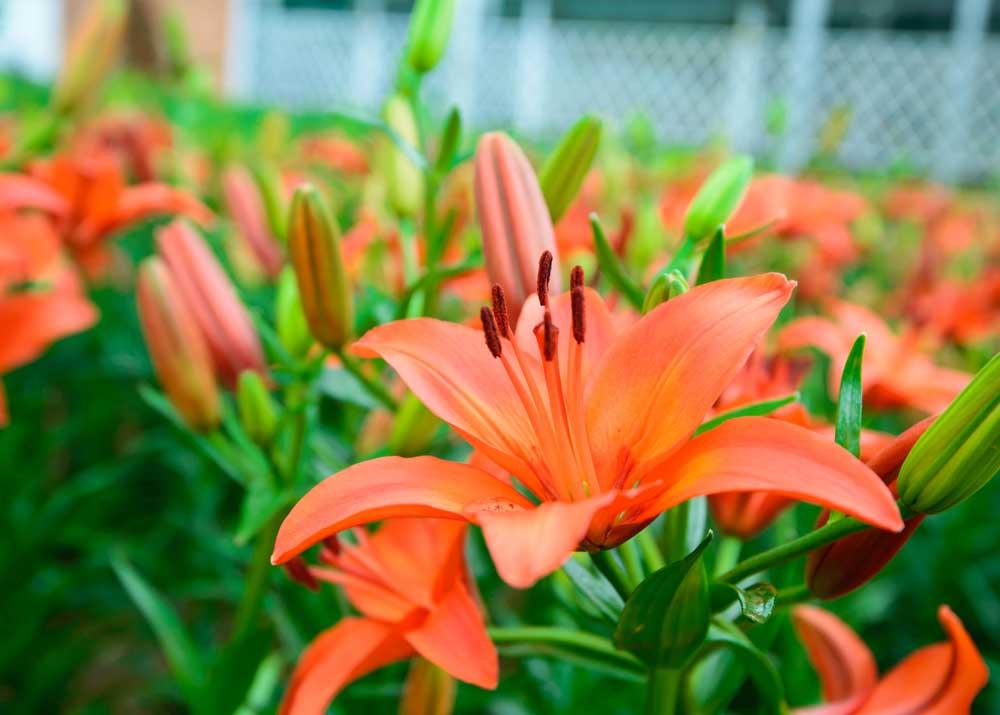 Как начать свой бизнес по выращиванию цветов