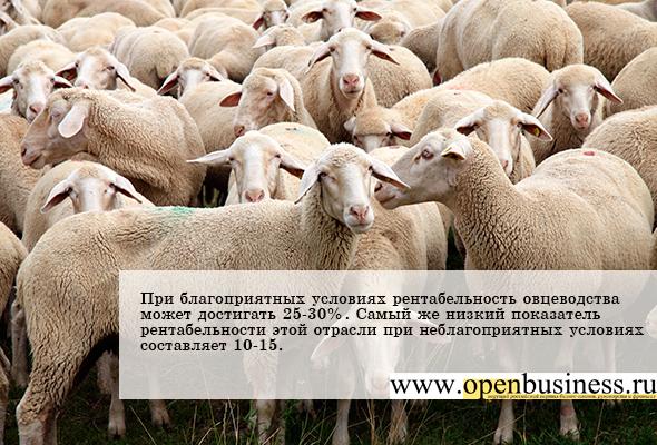 Овцеводство - прибыльный бизнес