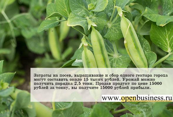 Выращивание гороха - прибыльный бизнес