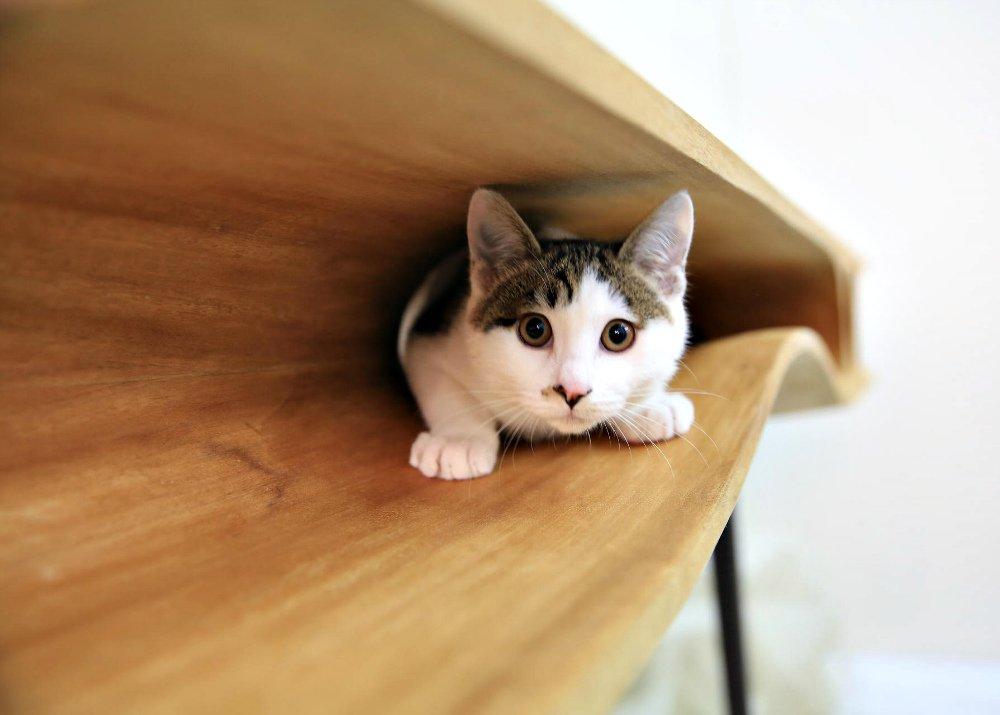 Производство столов с тоннелями для кошек