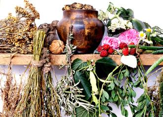 Свой бизнес: сбор лекарственных растений