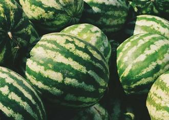 Аграрный бизнес: выращивание бахчевых культур в открытом грунте и в теплицах