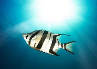 Как открыть бизнес по разведению аквариумных рыб