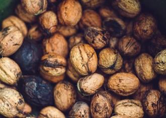 Как открыть бизнес по выращиванию орехов