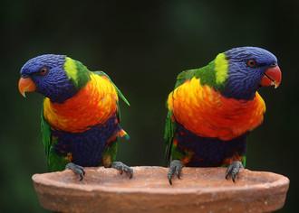 Свой бизнес: разведение и продажа декоративных птиц