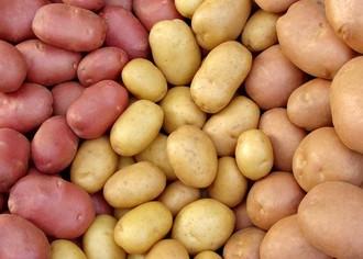 Свой бизнес: выращивание картофеля