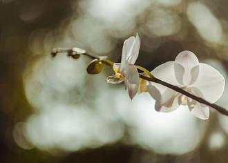 Свой бизнес: выращивание цветов (орхидей, гладиолусов, гвоздик, хризантем)