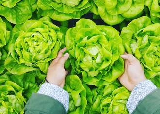 Свой сельскохозяйственный бизнес: выращивание крестоцветных