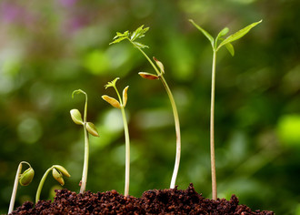 Организуем бизнес по производству и продаже удобрений