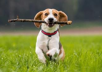 Бизнес план ветеринария бизнес план и рынок