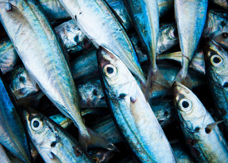 Аквакультурное рыбопроизводство как бизнес