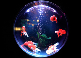 Бизнес-план по разведению пресноводных аквариумных рыб