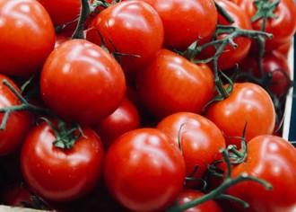 Как открыть бизнес по выращиванию томатов