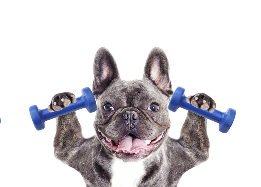 Свой бизнес: открытие фитнеса для собак