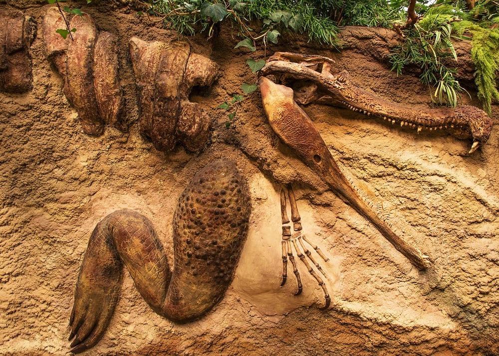 Свой бизнес на палеонтологических находках