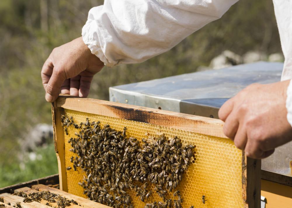 Пчеловодство с нуля: как открыть свою пасеку в 2021 году