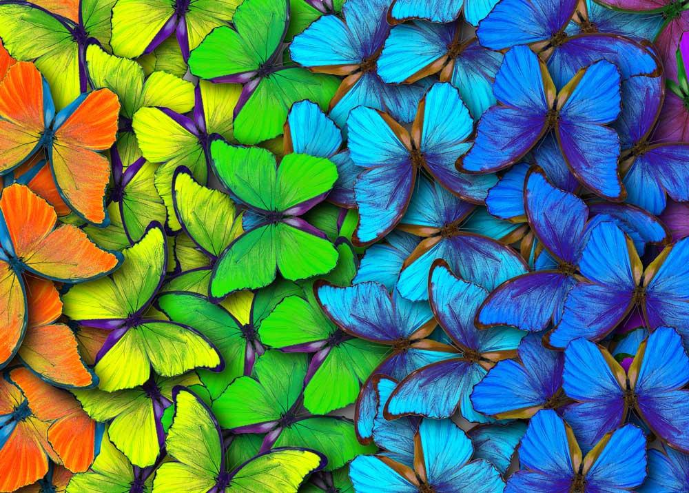Организация парка живых бабочек