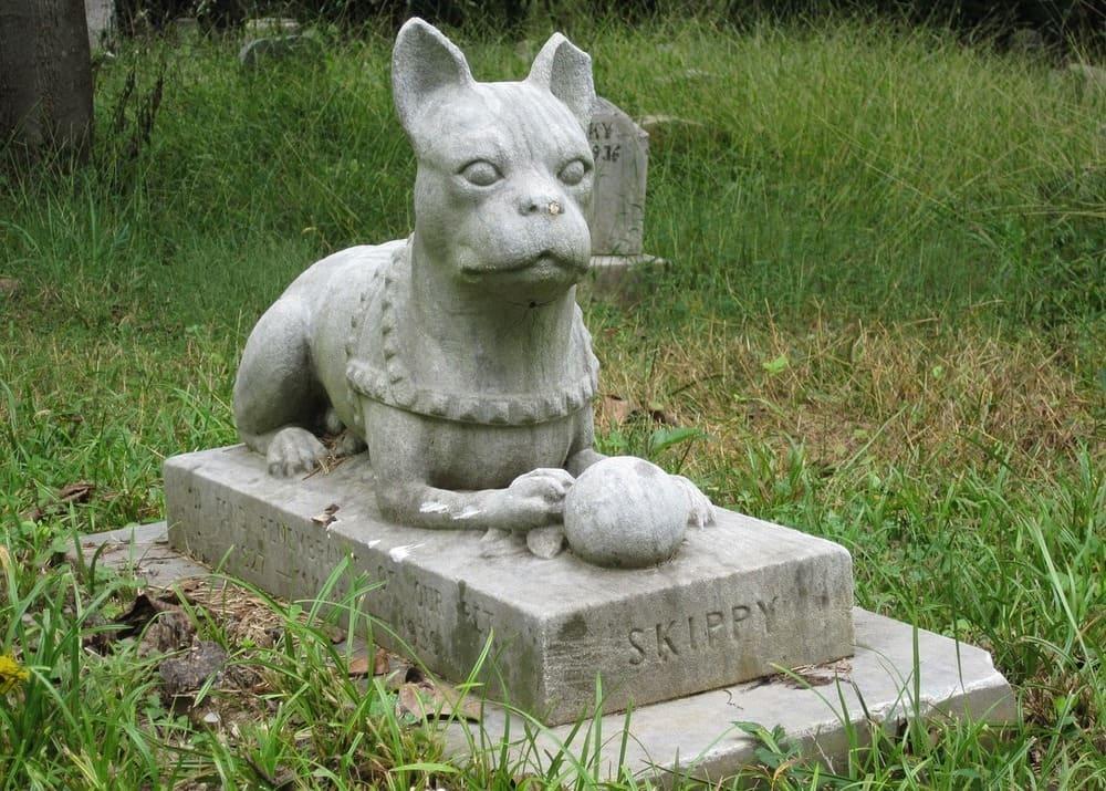 Свой бизнес: кладбище домашних животных