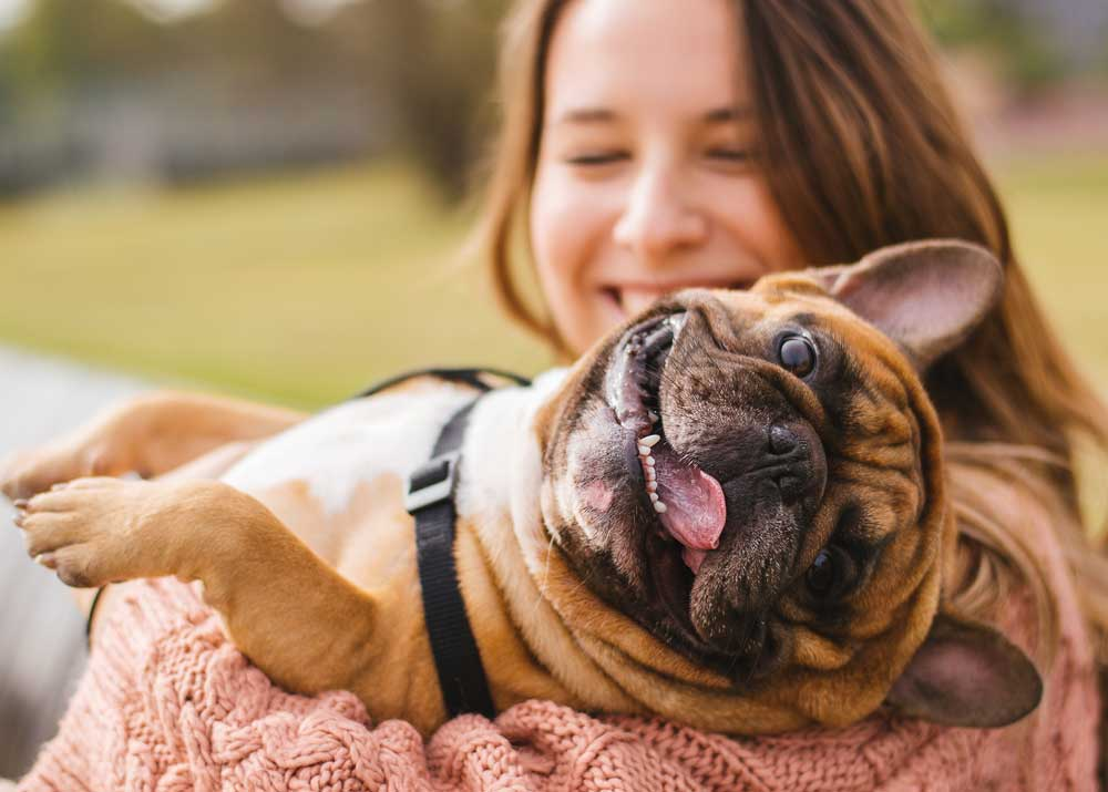 Открытие бизнеса: собаководство