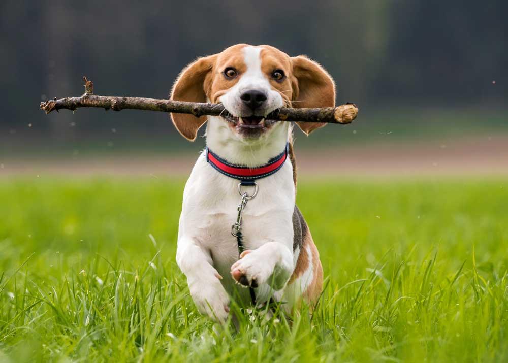 Кинологический бизнес: профессиональная дрессировка собак
