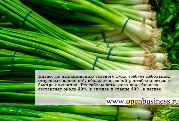 Бизнес план выращивания лука репчатого 82